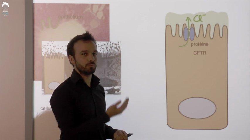 Qu'est-ce que la mucoviscidose ?