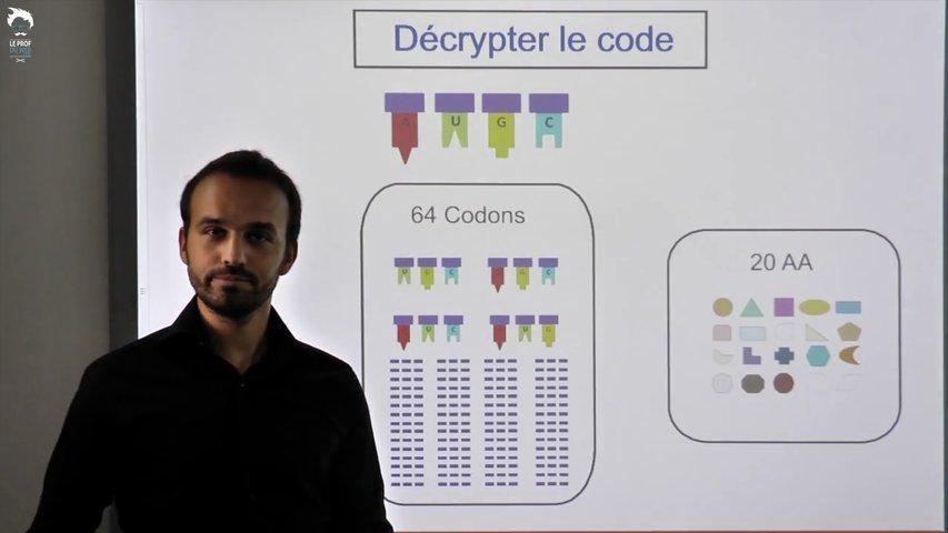 Le code génétique : de l'ADN à la protéine