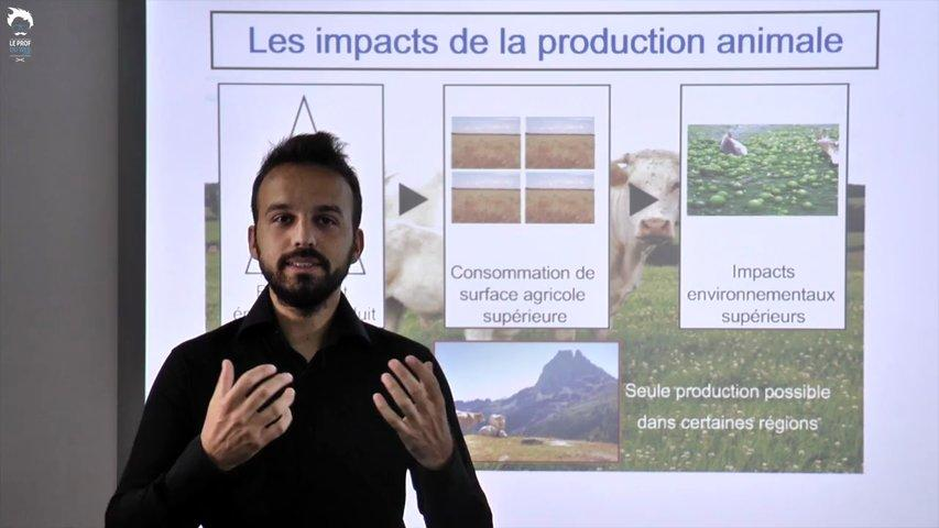 La production animale : une rentabilité énergétique réduite