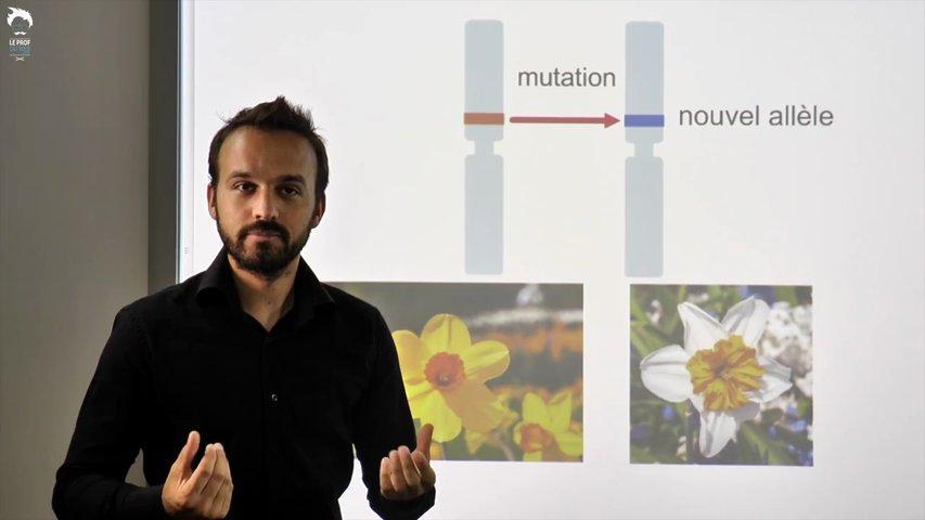 Les mutations : source de biodiversité