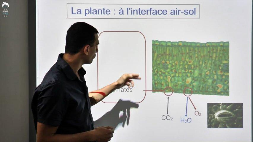 La plante, une interface entre l'air et le sol