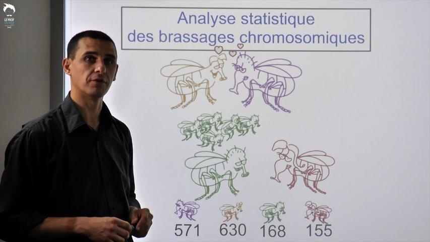 Brassage intra et interchromosomiques