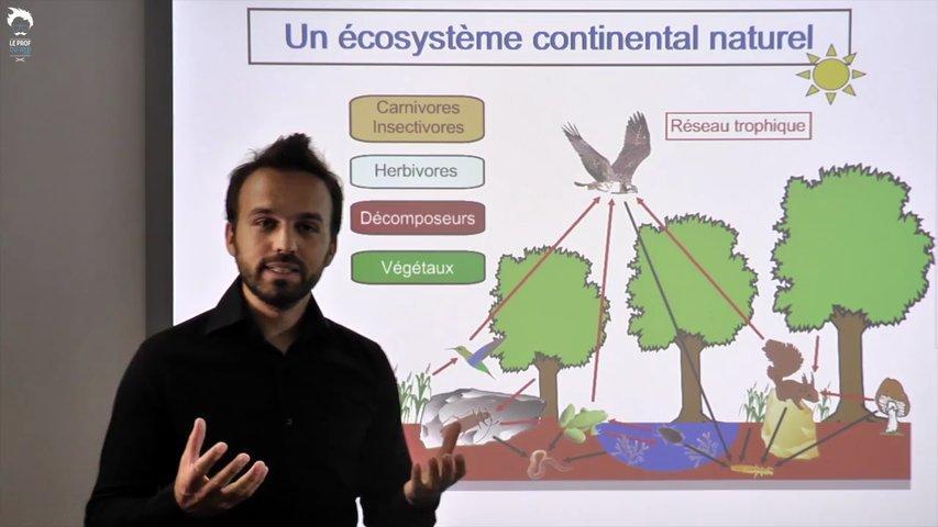 Le fonctionnement d'un écosystème continental naturel