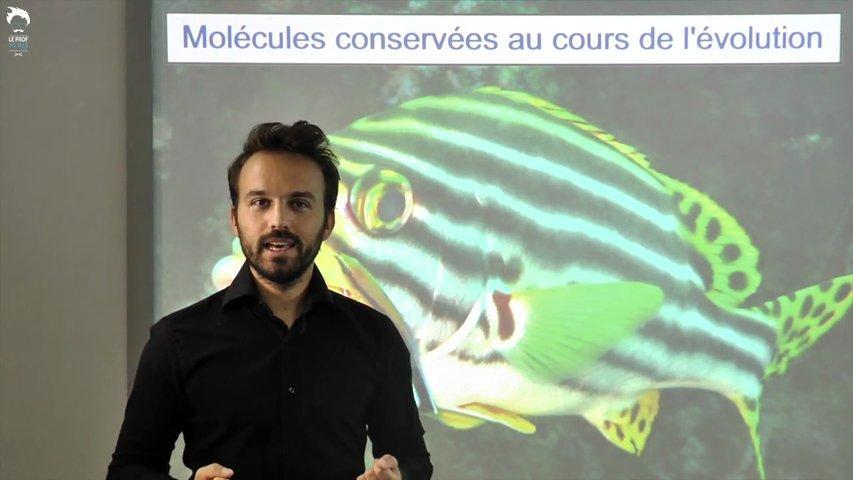 Immunité innée, cellules impliquées, histoire évolutive
