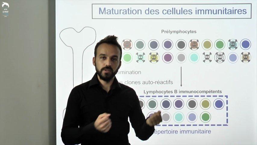 Diversité des cellules immunitaires