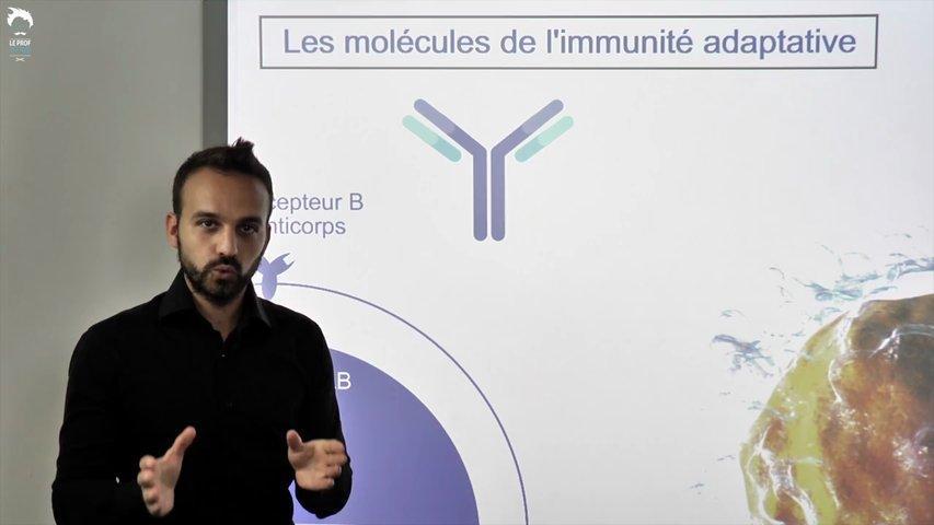 Cellules et molécules de l'immunité adaptative