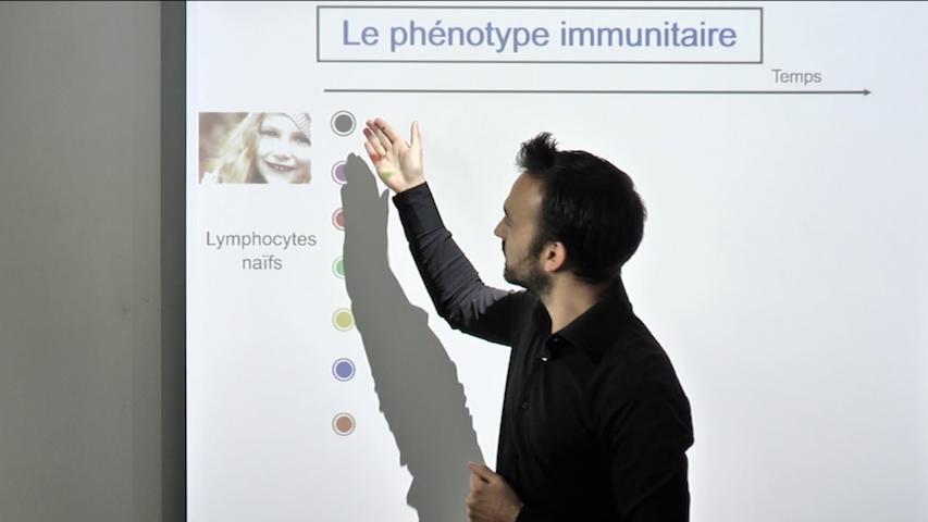 Le phénotype immunitaire