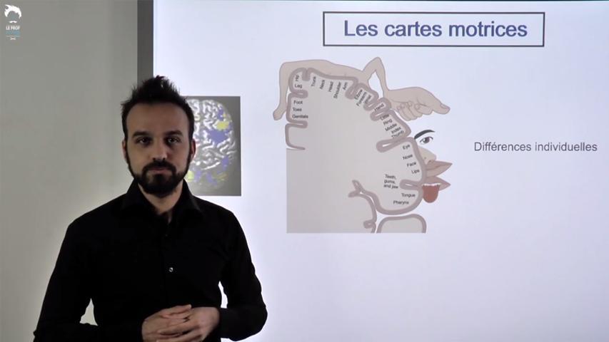 Motricité et plasticité cérébrale