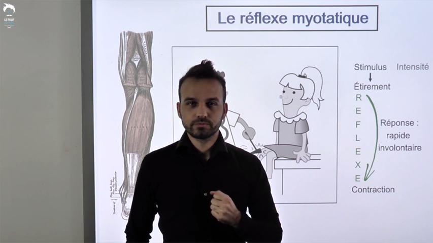 Le réflexe myotatique et l'arc réflexe