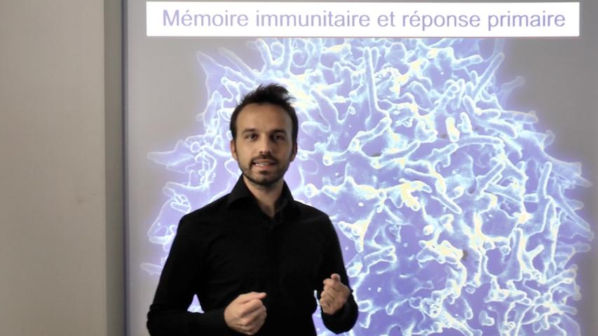 Mémoire immunitaire et réponse secondaire